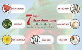 7 thảo dược quý tự nhiên giúp bổ gan thận, bảo vệ và giảm các triệu chứng bệnh viêm gan