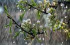 5 biện pháp phòng bệnh mùa mưa bão
